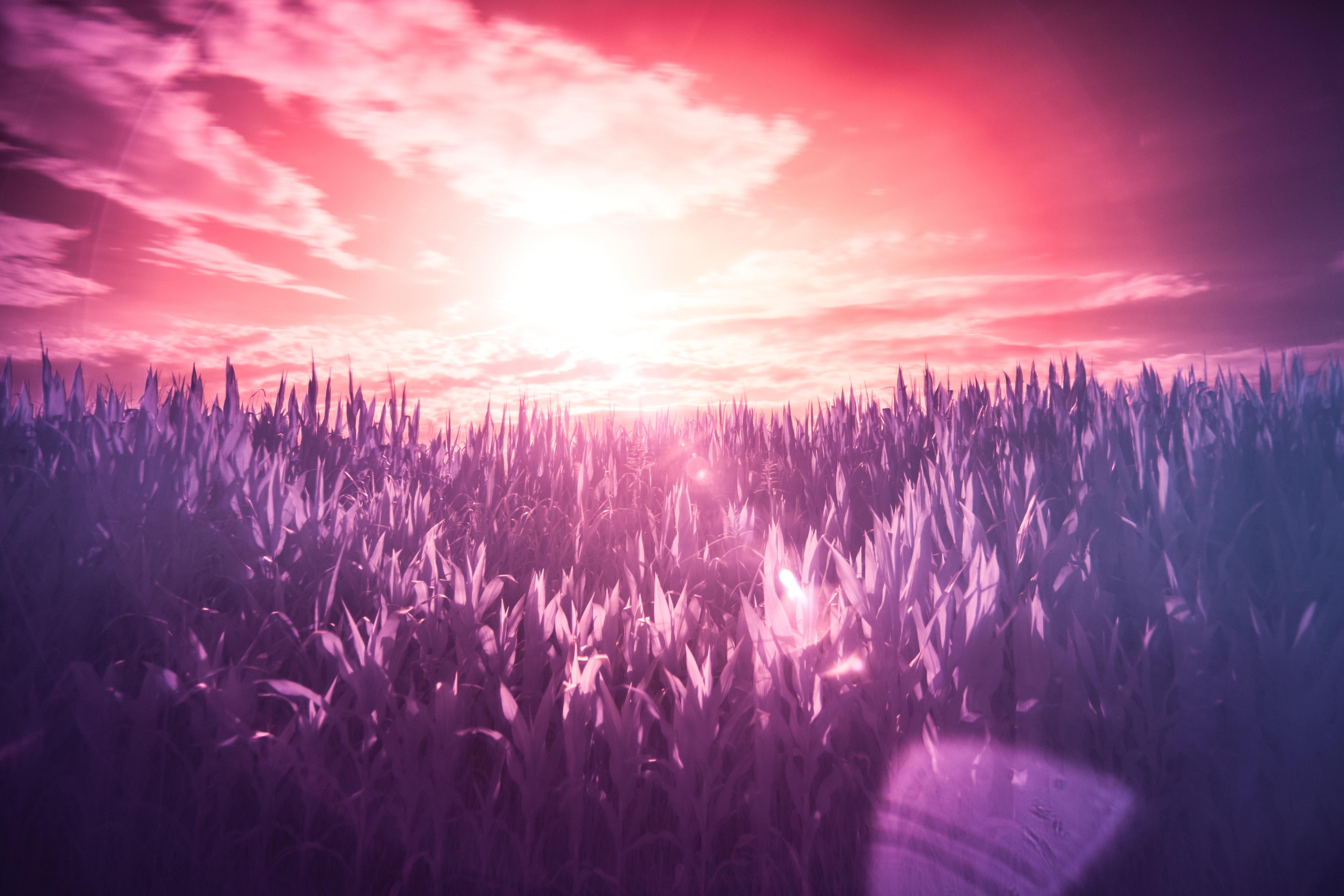 dream-filter-infrared-2220